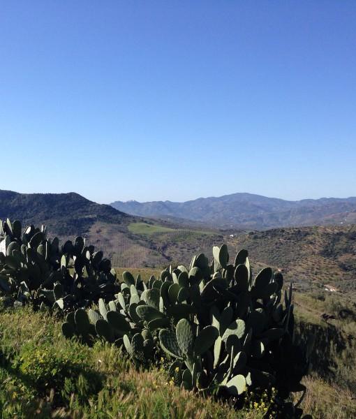 Uitzicht vanaf Retreat